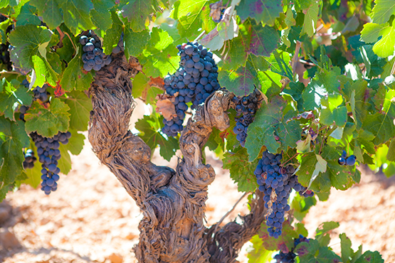 Nuestros vinos | Bobal Wine Cellars