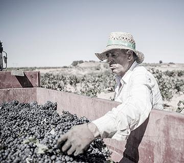 Quiénes somos | Bobal Wine Cellars